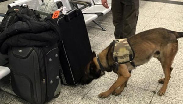 Almanya'dan gelen yolcuların valizlerine köpekli arama