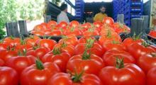 Rusya'dan Türk domatesine izin yok